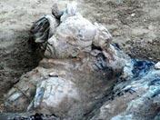 Las terracotas excavadas el día 10