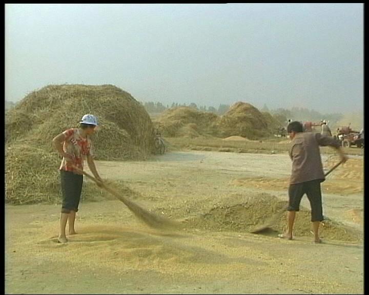会战三夏(三)科技:让小麦丰产丰收