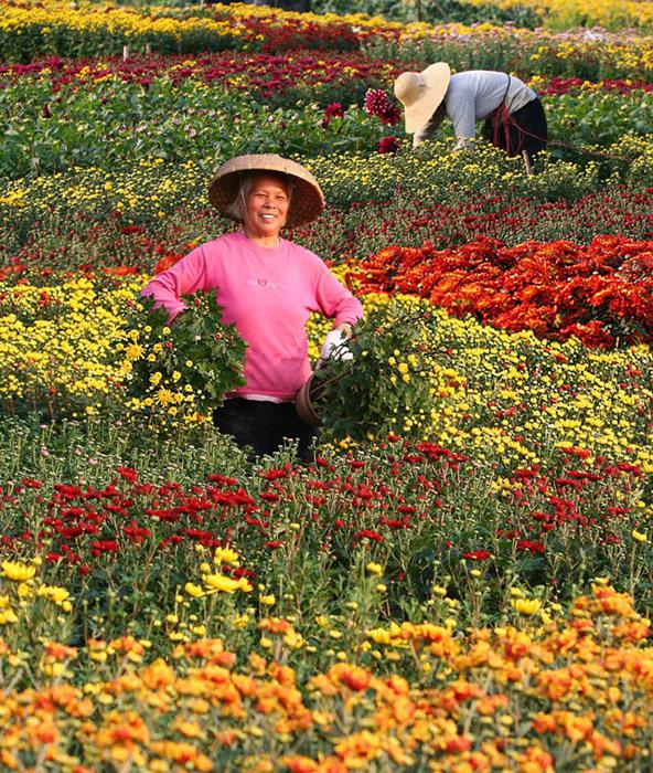 这是广东省中山市小榄镇花木基地拍得的相片,图片记录了花农为市民