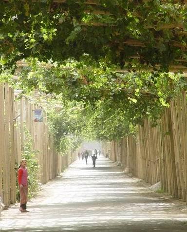 馒头树不高,远看着树干也算粗壮,再细看,伴着馒头树通常还有一户人家.