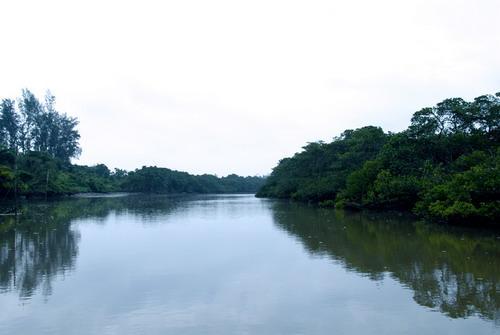 海口红树林