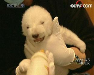 Germany's latest famous polar bear cub has finally opened her eyes for the first time A zoo keeper says it appears she is a little cross-eyed. (CCTV.com)