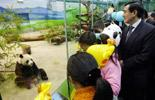 Giant pandas popular in Taiwan