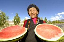 Taste sweet watermelon from Tibet!