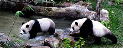 Panda pair make outdoor debut on Valentine´s Day in Taiwan