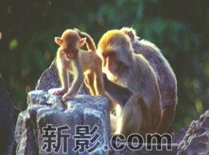 《猴王传奇》