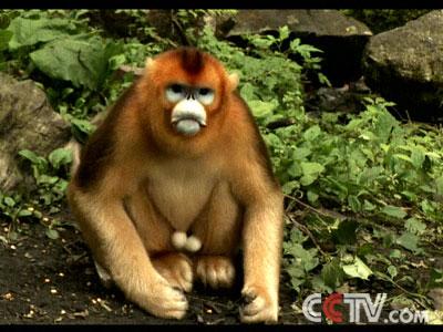 可爱母猴子头像