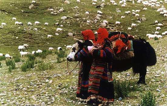 神山牧羊曲