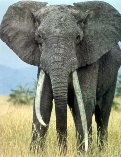 非洲野生动物园历险记