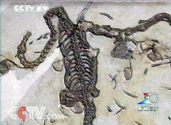 我国首次发现含胚胎的爬行动物软壳蛋化石