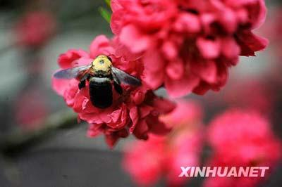 Days of warm weather have brought the flowers in Changsha,the capital city of Hunan Province, to full bloom. [Photo: Xinhuanet]