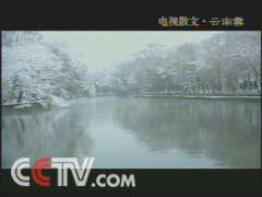 云南雪(央视历届展播作品) - 野山坡 - 山也悠然