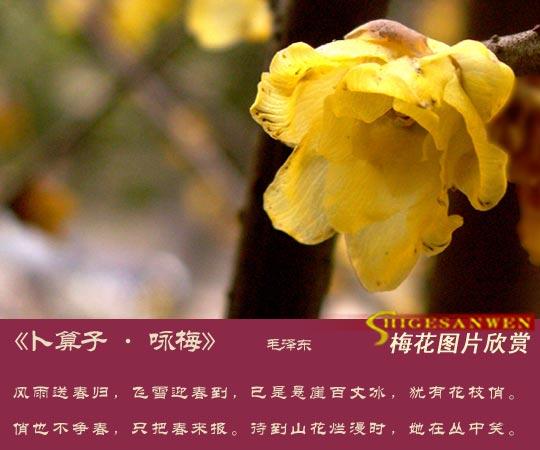 梅 花 系 列 - 比爱更爱 - 上善若水,水利万物而不争