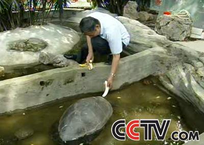 世界上最大的淡水龟是什么:淡水龟有那几种,什么样子.