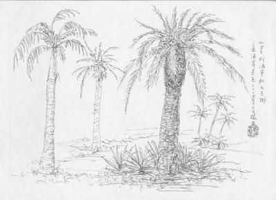 椰树风景素描画