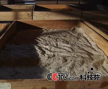 黄粉虫生产、加工与利用