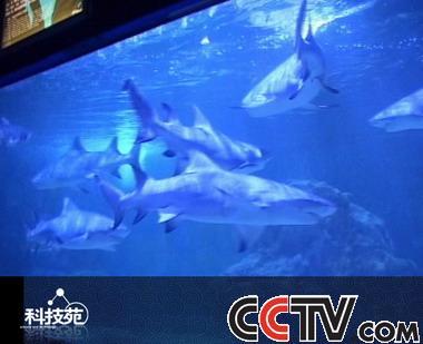 壁纸 海底 海底世界 海洋馆 水族馆 380_309
