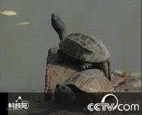 <font color=006600>12℃的乌龟怎么办办