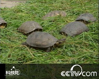 又到一年冬眠时 5 乌龟