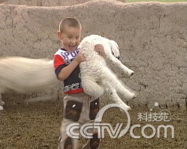 <font color=006600>怎样才能抓住一只羊?