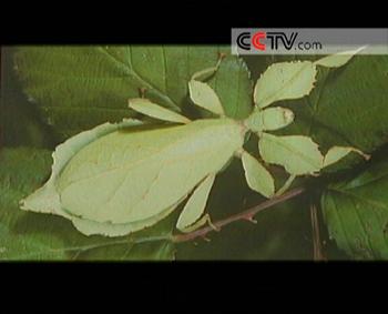 高黎贡山・昆虫探秘(3)