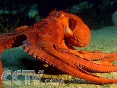 海洋的伪装动物