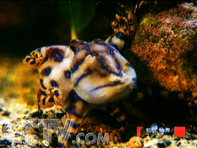 那些凭借伪装的海洋动物在这平静而美丽的水下世界或