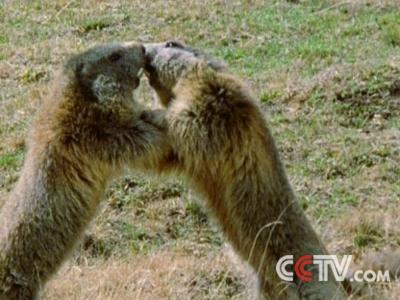 动物咀嚼gif