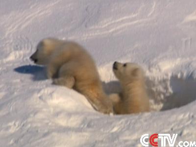 com-我们的地球—冰雪世界(上)