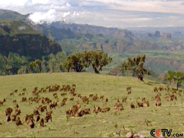 cctv人与自然 非洲野生世界