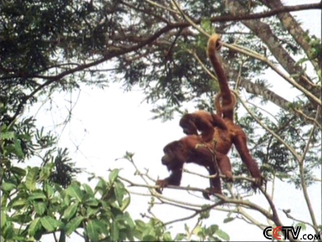 环球频道 人与自然 > 正文    热带雨林是陆地上生物多样性最丰富的