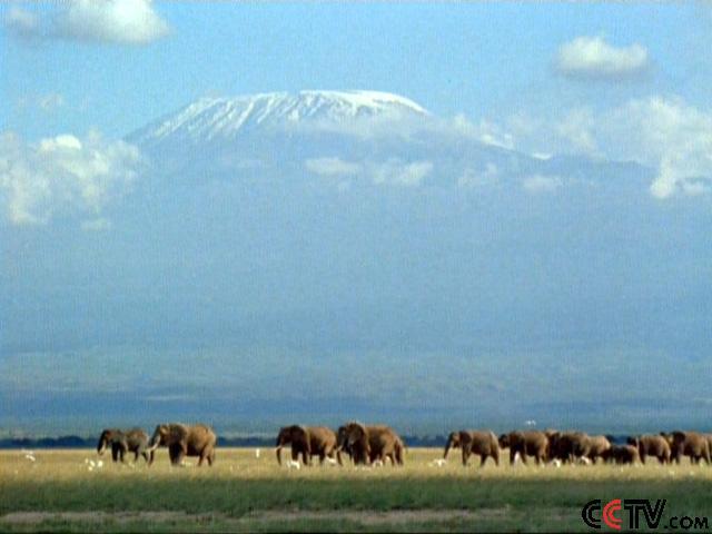 如果你认为非洲到处都是酷热难耐的话,你一定会惊讶不已。系列片中的第一部分展示了野生动植物如何适应非洲最严酷的环境一个耸入云端,气温可以降到零下20摄氏度的高山世界。从令人畏惧的埃塞俄比亚山脉,到古老的阿特拉斯山、从南非高原,再到大裂谷的雪顶巨型火山,这段不寻常的旅程穿越的是地球上最美的风景。山地大猩猩、黑豹会摔碎猎物的骨头的胡兀鹫、会捉老鼠的豺等特别的动物生活在这里,在非洲的屋脊上为生存而奋斗。