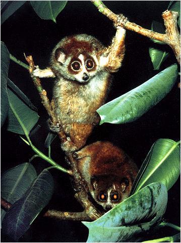 这里的原始森林占世界热带雨林总面积的30%