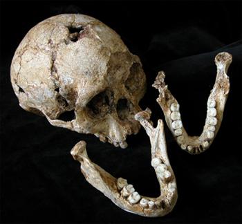 """印尼弗洛里斯岛再次发现""""霍比特人""""的骨骼化石"""