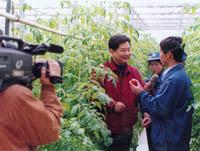同样西红柿,<br>卖价有高低。<br>现代温室中,<br>品质大不同。