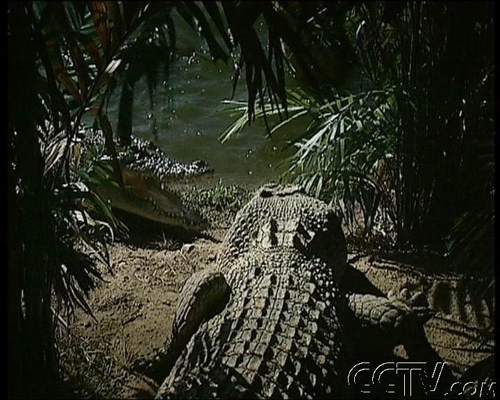 鳄鱼是不是保护动物