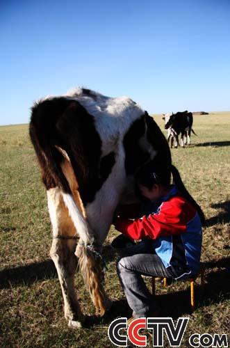 com-志愿者黄逸茗学习挤牛奶