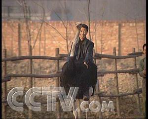 :鸵鸟被盗以后(2006.12.13)
