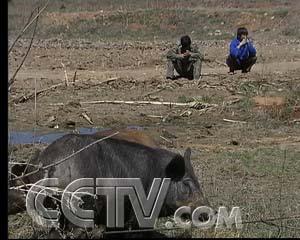 致富经野猪视频全集_放归山林的野猪(2007.5.23)-养野猪 - 三农致富经