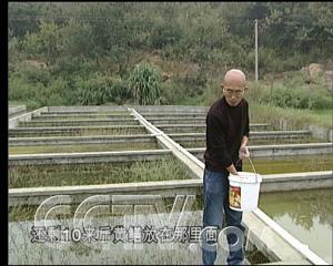 黄鳝养殖视频_养殖黄鳝在一则广告的诱惑下 - 三农致富经