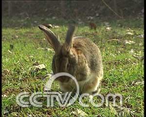 《细狗撵出了个兔产业(2008.1.9)》光盘