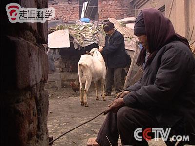 老奶性交视频_公羊会产奶?