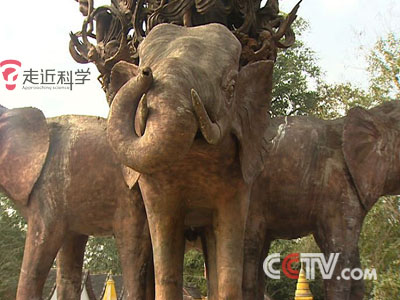 大象的报复