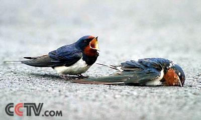 动物的爱情故事里也有山盟海誓