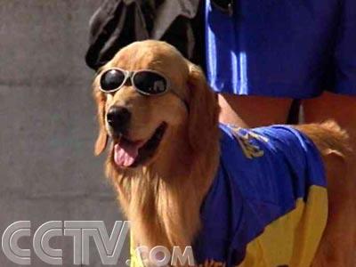 狗帮美国队赢得了世界杯_大尾巴狼_新浪博客图片