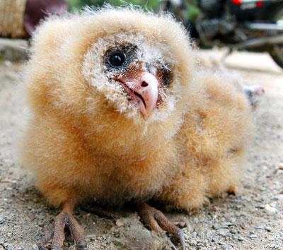 猴面鹰是国家二级保护动物