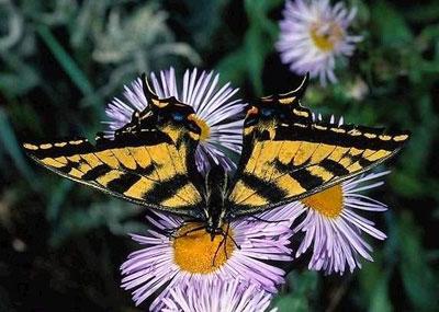 儿童折蝴蝶的步骤图解