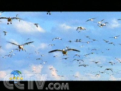 恐龙的后代——鸟类