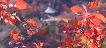 北京最受欢迎的秋季景点:香山