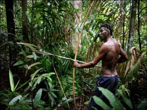 亚马逊雨林动物动画